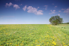 Spring field Royalty Free Stock Images