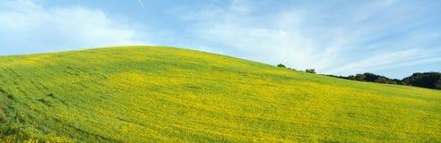 Spring Field. Mustard Seed near Lake Casitas, California stock photos