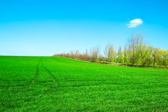The spring field. The green spring field and blue sky Stock Images