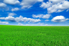 The spring field. The field and  blue sky Royalty Free Stock Image