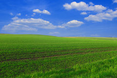 Spring field Stock Image