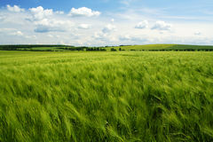 Spring field Royalty Free Stock Photo