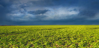 Spring field against sky before thunderstorm Royalty Free Stock Photography