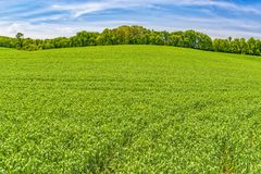 Spring Field Background With Copy Space. Horizontal shot of a bright green Spring field background with copy space.  Green trees line the back of the field under Stock Photo