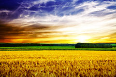 Spring field. Beautiful spring field with the blue sky Stock Photography