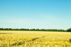 Spring field. Beautiful spring field with the blue sky Stock Photos