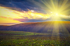 Spring field. Beautiful spring field with the blue sky Royalty Free Stock Image
