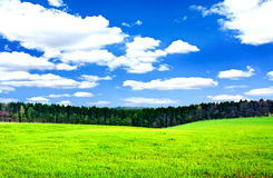 Spring field. Beautiful spring field with the blue sky Royalty Free Stock Photo