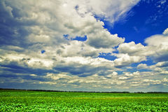 Spring field. Beautiful spring field with the blue sky Royalty Free Stock Images