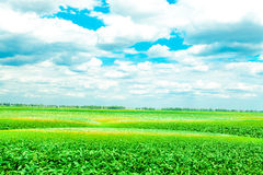 Spring field. Beautiful spring field with the blue sky Stock Images