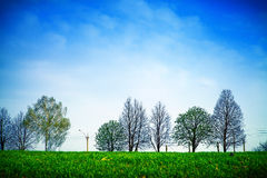 Spring field. Beautiful spring field with the blue sky Stock Photo