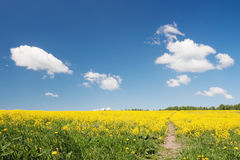 Spring field at beautiful day. Stock Photography