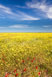 Spring field in bloom Stock Image