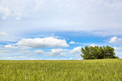 Spring field with clouds. Royalty Free Stock Photo