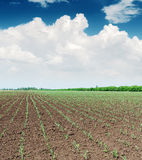 Spring field and clouds over it Royalty Free Stock Photography