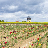Spring field with colorful tulips and water tower Stock Images