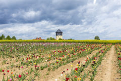 Spring field with colorful tulips and water tower Stock Image