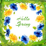 Spring field flowers for the eighth March or birthday Royalty Free Stock Image