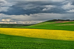 Spring field of fresh green hay and yellow flowers, rape. cloudy Stock Images