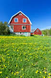 Spring field in front of Swedish house Royalty Free Stock Photography