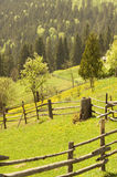 Spring field. Green landscape Royalty Free Stock Photos