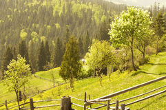 Spring field. Green landscape royalty free stock photography