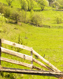 Spring field. Green landscape Royalty Free Stock Photo