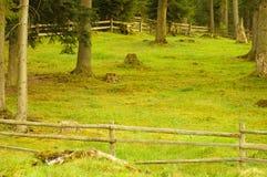 Spring field. Green landscape Stock Image