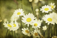 Spring field on grunge background Stock Photo