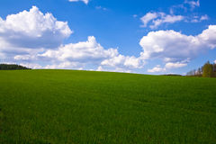 Spring field horizontal. Spring field, blue sky with clouds, horizontal Stock Photography
