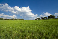 Spring field landscape Royalty Free Stock Photography