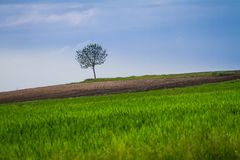 Spring field with lonely tree. Spring colorful field and a lonely tree Royalty Free Stock Photos