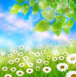 Spring field meadow background with fresh leaves Stock Photos