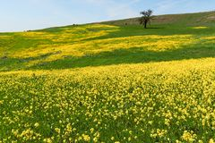 Spring field Stock Photos