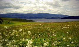 Spring field near the lake. Green field with spring flowers on the shore of a lake Stock Image