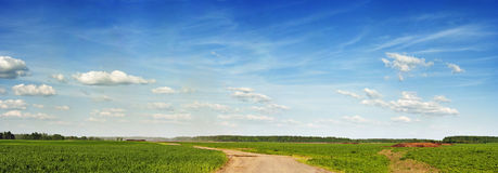 Spring field under blue sky Stock Images