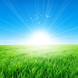 Spring Field Under The Morning Sun Stock Photography