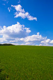 Spring field vertical. Spring field with grass, blue sky with clouds, vertical Stock Image
