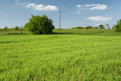 Spring field in village Royalty Free Stock Images