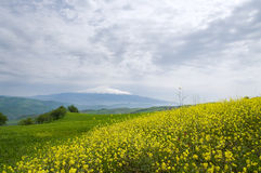 Spring field and volcano Etna Royalty Free Stock Images