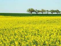 Spring Field With Trees Royalty Free Stock Photos