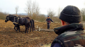 Spring field work in rural areas of Transcarpathia Stock Image