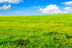 Spring fields Royalty Free Stock Photo