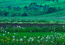 Spring fields stock image