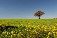 Spring fields Stock Images