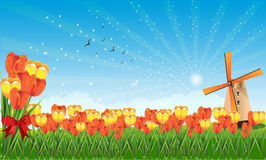 Spring fields. With tulips and a mill Vector Illustration