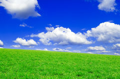 The spring fields. The spring field and blue sky Royalty Free Stock Photos
