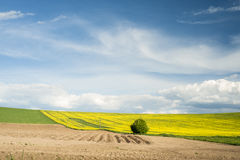 Spring fields Royalty Free Stock Images