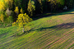 Spring in the fields Stock Photos