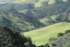 Spring Fields in Carmel Valley Royalty Free Stock Photo